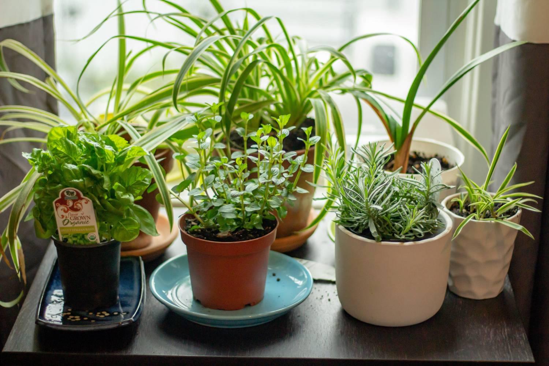 Ein Kräutergarten in der Küche am Fenster